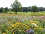 Wildflowers, Priory Park